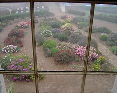 The garden at Highfield House residence of the manager of the Van Diemans Company near Stanley on a foggy day.