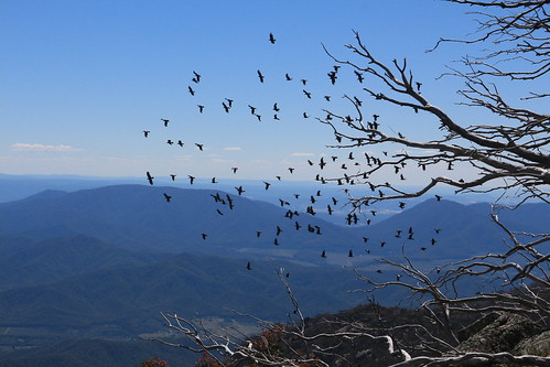 Mt Buffalo - crows fly