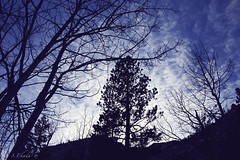 Cold Winter day. (sekada) Tags: vegas blue trees winter mountains cold nature silhouette clouds landscape outdoors lasvegas nevada eerie calm hike twigs mountcharleston