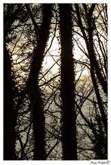 auh__MG_2412 (hjg-fotografie-dresden(Merlins_View_Of_Nature)) Tags: light mirror see licht meer rgen ghren