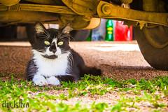 →→Cat--- (dyel_m.silva) Tags: verde grama gato carro