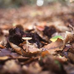 Bois de Benauge (Ysalis.net) Tags: 6x6 woods fuji provia zenzabronicaectl boisdebenauge