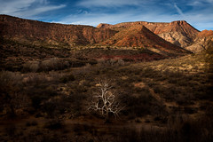 A tree and a trestle (RLisak @ PhotoCrossroads.com) Tags: arizona usa southwest verde train sedona canyon