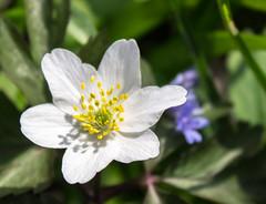2014_018 (casirfm) Tags: flower macro primavera closeup canon march spring fiore marzo springtime 2014 casirfm canoneos1100d