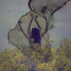 Burning Gold Fields (harriet.bols) Tags: flowers texture field paper arms burning growth creature brookeshaden