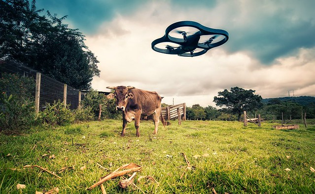 cow cattle farm country scenic meadow parrot 500px ardrone ifttt