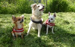 Happy Trio (Gery Singer) Tags: simplybeautiful