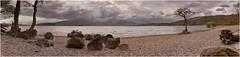 Loch  Lomond  Panorama (mtwhitelock) Tags: panorama scotland benlomond lochlomond lonetree milarrochybay millarochybay