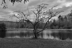 2014-04-28 Early spring at the park (tsegat01) Tags: park trees bw spring pond cmwdbw colorfulworldbw