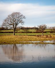 Near Barcombe Mills (Reid.J) Tags: uk blue england tree wet water reflections countryside nikon flooding sigma os 45 fields 4x5 1770 filed ratio f284 d5000