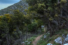 The path to home (Ryoushi no syokubutsuen) Tags: flowers wild plants plant orchid photography leiden europe european orchids kreta ramon terrestrial krete bril orchis flowerorchidaceae