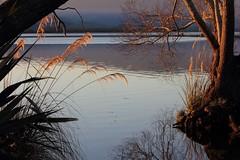Calm before the Breeze (Tones Corner) Tags: lake centralotago nzscene lakewaihola
