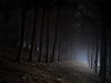 Edge Of A Forest (davidandsus) Tags: trees cloud mist tree pine dark corridor spooky otago otagopeninsula sandymount overtheexcellence