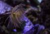 Spirographe (Denis-et-Alain-nature) Tags: paris poissons cineaqua aquariumpublic
