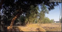 The Road Ahead, (dark-dawud) Tags: road trees rural landscape asian village basket view rice natural harvest straw fields remote crops bangladesh sacks cultur riceharvest ricecrops nabiganj