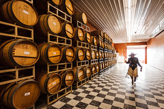 Pepper in Her Son's Winery (patrickbennettphoto) Tags: woman usa tourism horizontal america walking person us wooden washington oak unitedstates wine barrels unitedstatesofamerica farming barrel harvest winery human alcohol northamerica tasting cowgirl agriculture process aging fooddrink beverages cellar foodanddrink humanbeing stacked humans oneperson groups winemaking fermentation winerack winebarrels humanbeings winecellar buildingmaterials easternwashington checkeredfloor alcoholicbeverage socialissue traveldestinations colorimage agritourism washingtonwine merika viniculture vinification staycation landsports designerly winerygrapes cherrywoodbb southcentralregion weekenddestination agriculturalproduct rattlesnakehillsava culturawinery alcoholicbeveridge