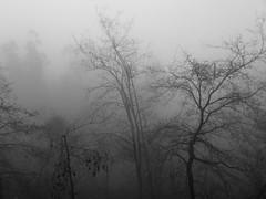 Arabesco invernal (TeresalaLoba) Tags: fog forest spain hiking galicia bosque gondomar senderismo niebla couso nboa valmior atorre teresalaloba reinodegondor atorre011