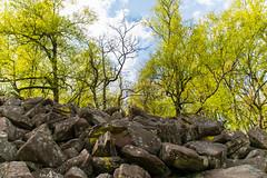 Felsenmeer 9 (JBsLightAndShadow) Tags: trees mountain berg rock forest nikon rocks hiking sigma steine heidelberg fels wald stein wandern felsen felsenmeer knigstuhl seaofrocks d3300