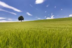 Summer (Sebo23) Tags: baum tree sommer summer landschaft landscape canon6d canon24704l