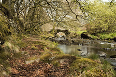 Robbers bridge (jebob) Tags: bridge trees water river flow moss path devon exmoor doonevalley riveroare