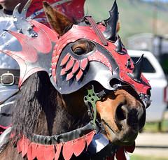 Knights Steed (RichSeattle) Tags: horse washington costume nikon fair d750 wenatchee joust renaissancefair richseattle