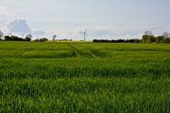 Frhlingsfarben - Schleswig-Holstein (Jualbo) Tags: green colors yellow germany deutschland spring landwirtschaft feld gelb fields grn windrad raps farbig fehmarn bunt farben holstein frhling schleswig frhlingsfarben