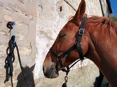 Project 366 - 124/366 - 05/03/2016 (Stphane Juban) Tags: horse