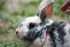 DSC_0028 (divi333) Tags: rabbit bunny bunnies ferrara rabbits conigli coniglio 2016 conigliando