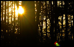 Forest Sunset VIII (Josh Rokman) Tags: nature outdoors nikond7000 swamp marsh forest sunset natural sun gold golden