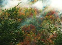 Otoo,bosques,parque nacional villarica,Chile (Gabriel mdp) Tags: otoo bosques parque nacional villarica sur region araucania contrastes colores rojo verde green paisaje landscape nature naturaleza niebla amanecer tree