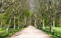 Forrest Path (Kjeldvdh) Tags: sky plant tree green nature netherlands leaf nikon day nederland zeeland calm branche walcheren domburg oostkapelle westhove d5500