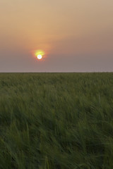 Purple Haze (JodBart) Tags: winstanley billinge fields wheat sunset sky