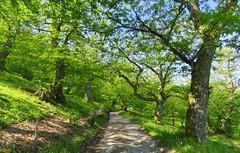 IMG_0004x (gzammarchi) Tags: strada italia natura montagna paesaggio monti castagneto sterrato firenzuolafi