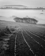 Slow Lane (Sarah_Brooks) Tags: uk trees england bw mist tree monochrome lines misty race mono track shoot slow somerset bushes mornig