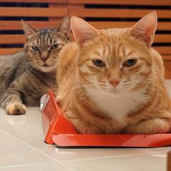 DSC09348S (lazybonessss) Tags: leica cat momo kitten nana kitten2 summicronm50 sonya7 sonyilce7