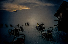 Repos des Mushers (Frdric Fossard) Tags: chien texture animal montagne alpes hiver grain huskies chalet neige savoie musher nuit cabane refuge ambiance traineau abstrait abri gte surraliste meute beaufortain attelage atmosphre