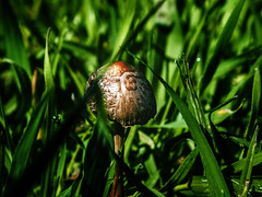 basic and complex (R.I. Nelson) Tags: life park macro green nature rural mushrooms micro hongos grasp