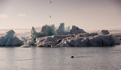 Paisaje glaciar (Lou Rouge) Tags: ice animals landscape iceland islandia paisaje glacier glaciar hielo icebergs foca jkulsrln glacierlagoon vatnajkull arquitecturaefmera charrn arctictern lagunaglaciar charranesrticos
