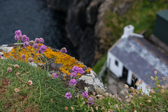 Fisherman's hut, Carrick a Rede (ghostwheel_in_shadow) Tags: ireland sea wild house flower coast flora europe unitedkingdom cottage coastal northernireland ulster antrim carrickarede ropebridge domesticarchitecture architectureandstructures