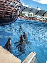 Delfines (Dieguet0) Tags: sea water agua aqua barco dolphin piscina pileta aquatic aire delfines loveanimals hapineess