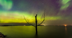 Harriet Lake Aurora 1.1 (Jack Lefor) Tags: nightphotography panorama lake reflection nature water night stars landscape fineart scenic panoramic aurora stump northdakota treestump nikond810
