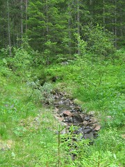 Nature Reserve Hovsfjorden (Multerland.........) Tags: trees fern nature water norway moss stream wildlife pines naturereserve wildflowers hallingdal buskerud hovsfjorden june2016