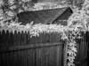 Sea of Vines (MStoeckle) Tags: eastprovidence blackandwhite bw ir outdoors riverside wildlife olympus monotone rhodeisland infrared converted scape 25mm outdoorliving epl2