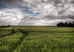 Barley near Winchester, Hampshire (neilalderney123) Tags: green barley rural landscape farm olympus winchester 2016neilhoward