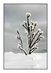 127 Niagara Falls, Ontario 2004 (DBattag) Tags: winter ice waterfalls scenary niagaraonthelake niagarafallsontario