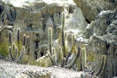 Bolivia, Valle de la Luna #6 (foto_morgana) Tags: cactus southamerica nature outdoor bolivia clay valledelaluna nikoncoolscan lapaz analogphotography analogefotografie vuescan bolivianandes travelexperience photographieanalogue