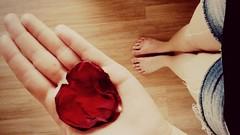 Happy Valentine's Day in Brazil ♥ (JF. Pasturczak) Tags: love amor flor rosa coração valentinesday diadosnamorados 1206 pétala