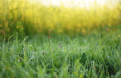 morning grass I (AzureFantoccini) Tags: morning summer plants nature grass countryside russia dew
