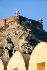 Monkeys in Amber Fort, Jaipur, India (inchiki tour) Tags: travel india animal architecture landscape monkey amber photo asia fort palace unesco  jaipur rajasthan worldheritage amberfort  amerfort