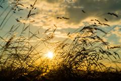 Spaziergang 26. Juni 2016 (mg16373) Tags: felder wolken landschaft sonnenschein getreide